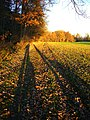Call For A New Guinness Record (Longest Shadow) - panoramio.jpg