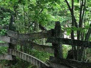 Camino por el bosque.JPG