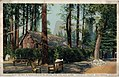 Camp Curry's Open air dining room, and the half dome, Yosemite Valley (NBY 22933).jpg
