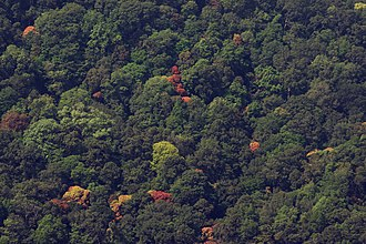 Anaimalai Hills - Image: Canopy of tropical rain forest in Anaimalai hills IMG 8537