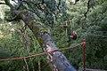 Canopy tree top tours, Tsitsikamma Forest, Western Cape (6253205746).jpg