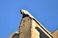 Carpentras - Cathédrale Saint-Siffrein 2.JPG