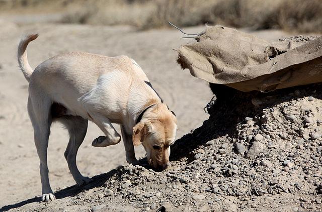 perro-come-heces