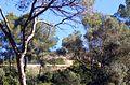 Castillo y bosque de Bellver.jpg