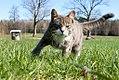 Cat in a field.jpg