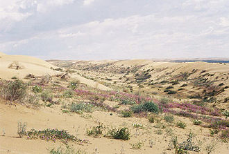 Algodones Dunes - North Algodones Dunes Wilderness: This image shows the vegetation of the dunes, where they are not disturbed by recreational vehicles.