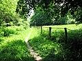 Chemin des Tailles le long de la Sèvre Nantaise - panoramio.jpg