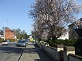 Cherry Trees, Campsie Road, Omagh - geograph.org.uk - 1209520.jpg