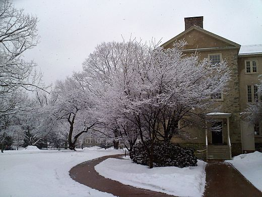 Cherry trees surrounding Founders Hall after a snow storm. Cherry Trees around Haverford College Founders Hall.jpg