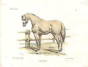 Victor Adam - Navarra horse, lithography
