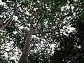 Chinnar River @ Chinnar Wildlife Sanctuary - panoramio (4).jpg