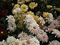 Chrysanthemum from Lalbagh flower show Aug 2013 7950.JPG