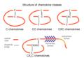ChtxChemokineStruct.png