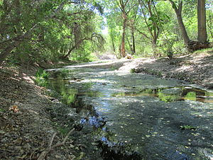 Cienega Creek Pima County Arizona 2014.jpg