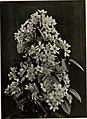 Climbing plants (1915) (20470111119).jpg