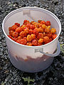 Cloudberries (3804524774).jpg