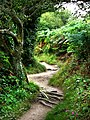Coast path Dinas Island, approaching Cwm-yr-Eglwys - geograph.org.uk - 534077.jpg