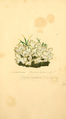 Coloured Figures of English Fungi or Mushrooms - t. 158.png