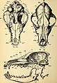 Comparative zoology, structural and systematic - for use in schools and colleges (1883) (20484143189).jpg