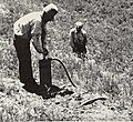 Control of field rodents in California (1949) (20504102408).jpg