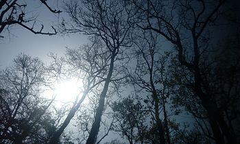 Cool sunshine.jpg