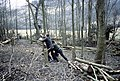 Coppicing in Hadleigh Country Park - geograph.org.uk - 1567789.jpg