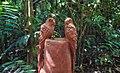 Costa Rica DSCN1304-new (30762089160).jpg
