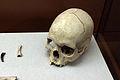 Cráneo Cova de la Sarsa.JPG