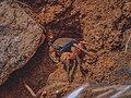 Crab in Soil.jpg