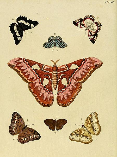 Ficheiro:Cramer&Stoll-uitlandsche kapellen vol. 1- plate 008.jpg