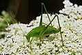 Creepy crawlies 2013 Ingelfingen (und drum rum) (9402001661).jpg