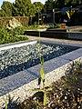 Crepis pulchra sl57.jpg