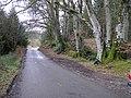 Crockfad Woods - geograph.org.uk - 137593.jpg