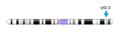 Cromosoma 1.png