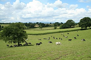 English: Cross Border Cows. This pasture strad...