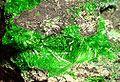 Cuprosklodowskite-121647.jpg
