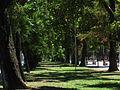 Curico, alameda (13654493944).jpg