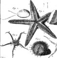 Curious remarks and observations in physics, anatomy, chirurgery, chemistry, botany, and medicine Fleuron T113859-2.png
