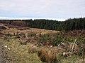Cwr Coedwig Brenig - Edge of Brenig Forest - geograph.org.uk - 372759.jpg