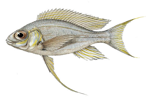 Fish of Lake Tanganyika