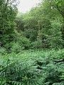 Cypress Wood - geograph.org.uk - 1380481.jpg