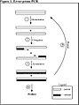 DNA Shuffling111.jpg