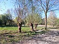 DU-LSG Essenberger Bruch 03.jpg