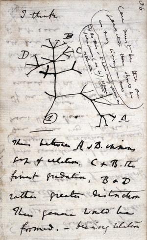 Inception of Darwin's theory - Image: Darwin Tree 1837