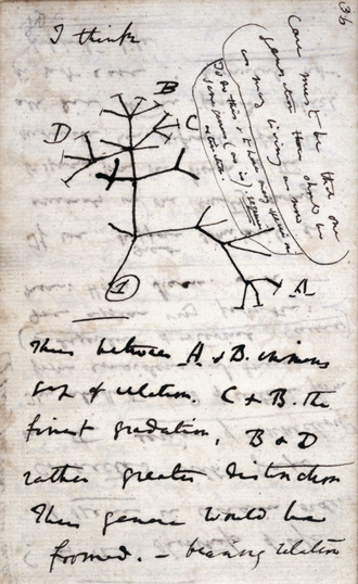 "In mid-July 1837 Darwin started his ""B"" notebook on Transmutation of Species, and on page 36 wrote ""I think"" above his first evolutionary tree. Darwin Tree 1837.png"