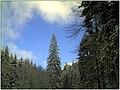 December Black Mountains Foret Noir - Master Mythos Black Forest Photography 2013 - panoramio.jpg