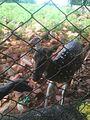 Deer Park Tirupati 01.jpg