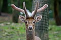 Deer at Knowsley Safari Park.jpg