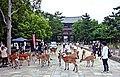 Deer roaming in Nara city. 2010.jpg