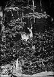 Deer taken by flashlight.jpg